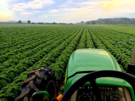 Tractor in a Kale field